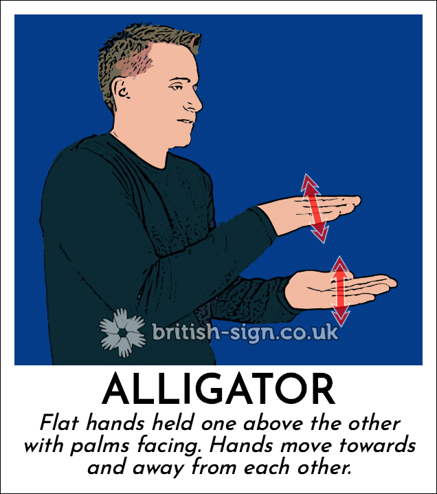 Alligator: Flat hands held one above the other with palms facing. Hands move towards and away from each other.