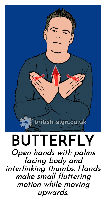 Butterfly: Open hands with palms facing body and interlinking thumbs.  Hands make small fluttering motion while moving upwards.