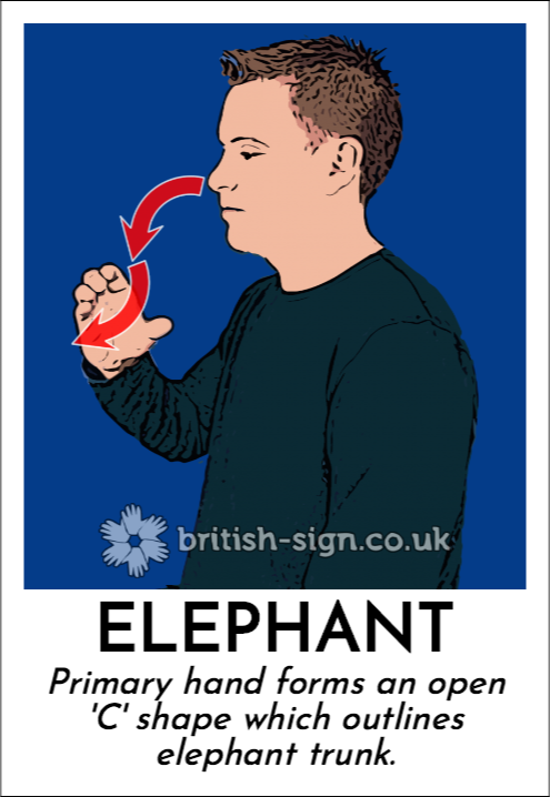 Elephant: Primary hand forms an open 'C' shape which outlines elephant trunk.