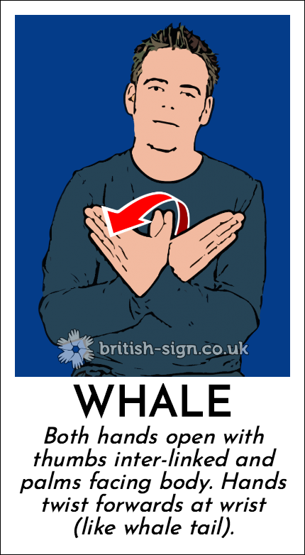 Whale: Both hands open with thumbs inter-linked and palms facing body.  Hands twist forwards at wrist (like whale tail).