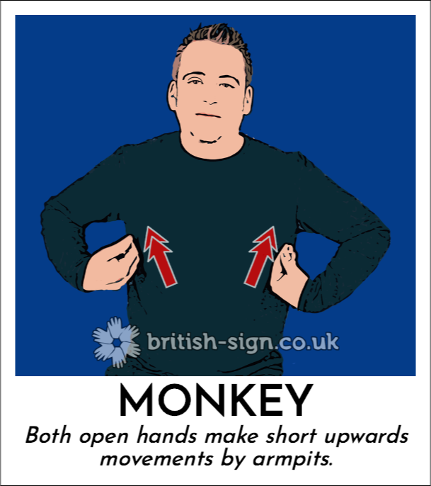 BSL Sign of The Day - 2018/12/11-monkey.png